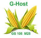 СЕМЕНА КУКУРУЗЫ G HOST GS 105 M25 (ДЖИ ХОСТ) ФАО 250, фото 3
