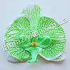 Орхидея фаленопсис головка 10см, бело-салатовая