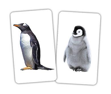 Игра Животные и детеныши Вундеркинд с пеленок, карточки домана Животные и детеныши
