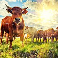 Для животноводства