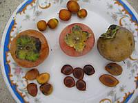 Семена хурмы гибридной