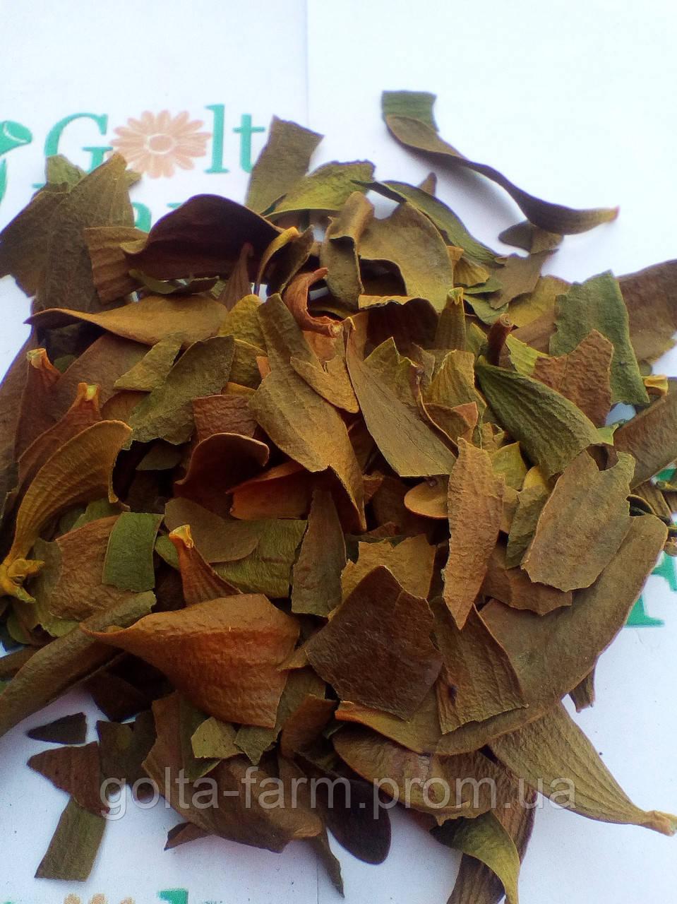 Омела белая листья