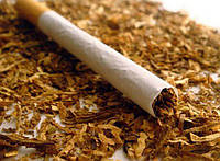 Семена Табака курительного пакетированные