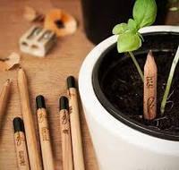 Карандаш прикол с семенами зелени 8 шт/уп.