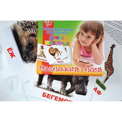 """Набор детских карточек """"Дикие животные"""", 951284"""