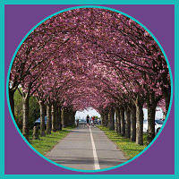 Квесты в парке «Киото»