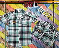 Рубашка в клеточку с коротким рукавом 9,10,11,12 лет