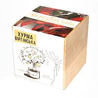 Набор для выращивания Экокуб Хурма