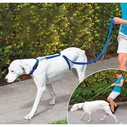 Поводок для собак The Instant Trainer Leash, фото 2