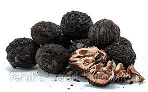 Семена ЧЕРНЫЙ ОРЕХ (Juglans nigra)