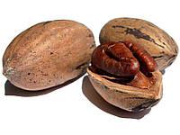Семена Кария Пекан