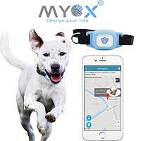 Зачем нужен GPS ошейник для собак и котов?