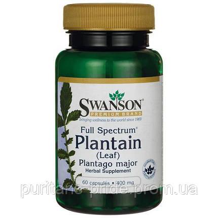 Лист подорожника Swanson Full Spectrum Plantain (Leaf) Plantago Major 400 mg 60 Caps, фото 2
