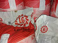 Высокоурожайный подсолнечник ЛГ 5580 Лимагрейн. Семена Лимагрейн 5580 устойчивые к засухе и заразихе купить., фото 1