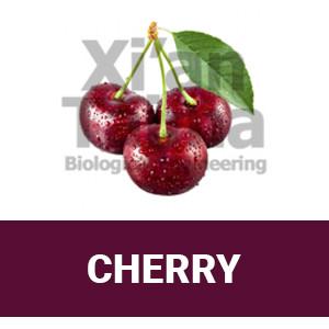 "Xi'an Taima ""Cherry"""