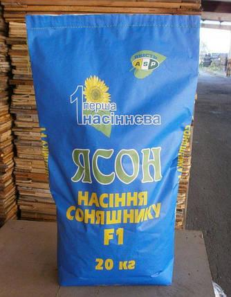 Семена подсолнечника/подсолнуха Ясон ASP (Агроспецпроект), фото 2