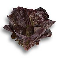 Семена салата Галатея 1000 сем.Рийк цваан., фото 1