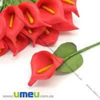 Калла латексная, Красная, 1 шт. (DIF-006757)