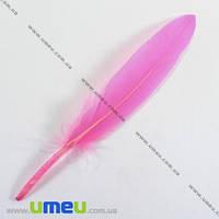 Перья Гусиные, Розовые, 10-13 см, 1 уп (12 шт). (PER-002622)
