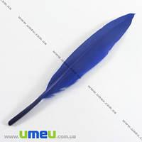 Перья Гусиные, Синие (Ультрамарин), 10-13 см, 1 уп (12 шт). (PER-002626)