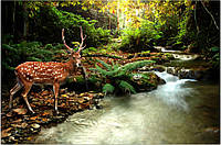 Фотообои олень в лесу