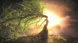Древесина – это больше, чем просто материал
