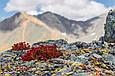 Настойка красной щетки 250 мл пр.Алтайвитамины, фото 2