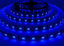 Светодиодная лента LED влагозащищённая, на черной основе, 12V, SMD5050, IP65, 60 д/м, синий