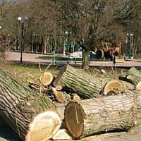 Спил дерева, Харьков