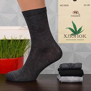 Мужские носки Ромашки B36. В упаковке 12 пар