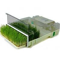 Микроферма EasyGreen, проращивание пшеницы, ржи, любых семян.