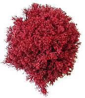 Стабілізований мох ягель, фото 1