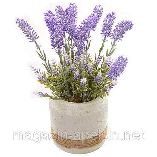 Лонган в домашних условиях фото растения