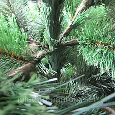 Новорічна ялинка Сибірська, фото 3