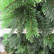 Новорічна ялинка Сибірська, фото 2