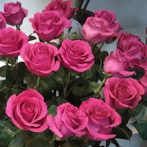 "Троянда чайно-гібридна ""ТОПАЗ"" ('Topaz')"