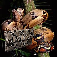 Кошельки, портмоне, чехлы, ремни, клатчи из кожи змеи