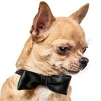 Аксессуар Pet Fashion Галстук-бабочка для собак