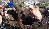 Спилить дерево. Выкорчевать пень. Скосить траву, фото 3