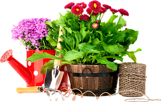 Средства защиты для сада и огорода