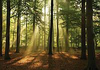 Фотообои бумажные на стену 368x254 см Высокие деревья в лесу (10331P8CN), фото 1