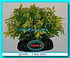Растение Атман Q-086E, 20см