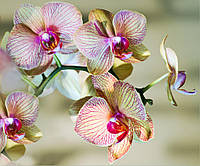 Фотообои цветы , орхидеи