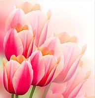 Фотообои тюльпаны головки