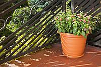 Горшок для цветов Натура 170мм Теракот 31 Ламела 405