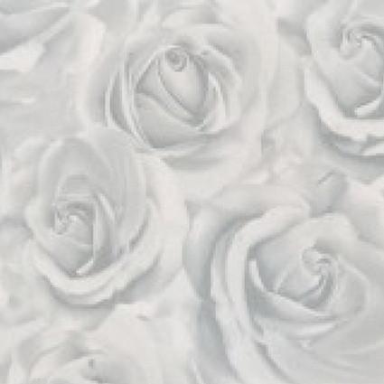 Роза белая ТМ-433. 433