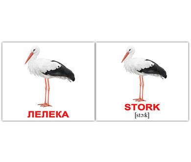 """Картки Домана """"Birds/Птахи"""", англо-українські картки Домана"""