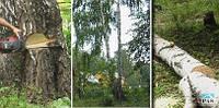 Спиливание аварийных деревьев в Киеве и области