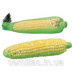 Семена кукурузы Ракель F1 (Rakel F1), 5000 сем., сахарной биколор