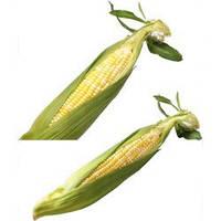 Семена кукурузы Камберленд F1 (Kamberlend F1), 50000 сем., сахарной биколор